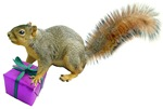 Squirrel with Gift
