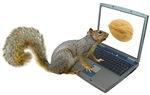 Squirrel at Computer
