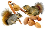 Squirrels Cracking Nuts