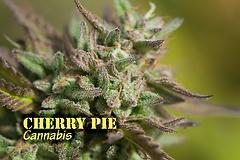 Cherry Pie (with name)