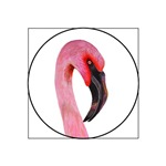 Pink Flamingo Bird