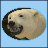 POLAR BEAR T-SHIRTS & GIFTS