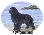 Newfoundland Dawn Patrol