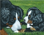 Bernese Mountain Dog Mom and Baby