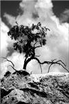 Black and White Photoraphy