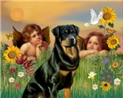 TWO ANGELS<br>& Rottweiler #3