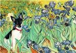 IRISES<br>& Toy Fox Terrier