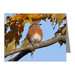 Note Cards (box of 10)