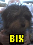 Bix Dog™