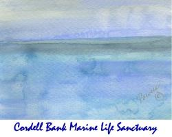 Cordell Bank Marine Life Sanctuary, Bodega Bay, CA