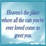 Cats in Heaven
