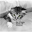 Kitty Says: Our Struggles Develop Our Strengths