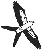 Swallow-tailed Kite Cartoon