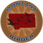Montana Birder