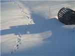 Winter Tracks