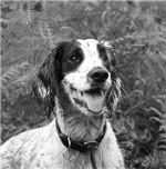 T shirts and clothing Dog portrait