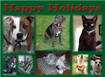 A Dog's Life Rescue Holiday Cards - Design 2