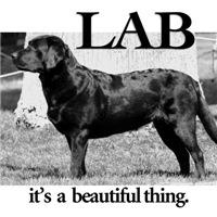 <b>Labs</b>