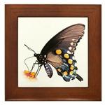 Butterfly Framed Tiles