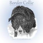Porcelain Border Collie