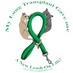 Lung Transplant: Cat