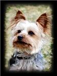 Antonietta Pets  Portraits Product