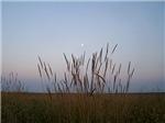 Prairie Grass Sky