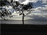 Seaside Tree 2
