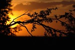 Branch with Sunset