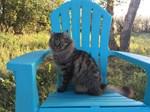Adirondack Cat