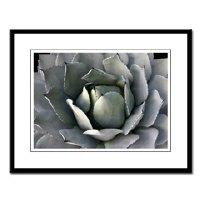 Framed SF botanical + nature photographs