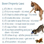 Boxer Rules