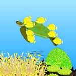 Green Sea Turtle and Tangs
