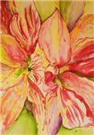 Succulent Amaryllis