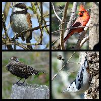 Birding Collection