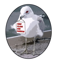 Gull says Keep Clams