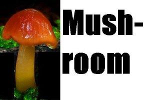 Mushroom pic (cut)