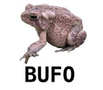 BUFO the grouchy toad