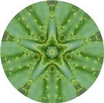 Aloe Star
