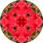 Red Hibiscus 4