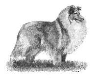 Shetland Sheepdog Items