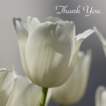 Thank You Gifts White Tulips