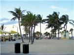 LANDSCAPES OF FLORIDA