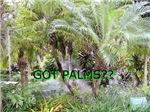 GOT PALMS?