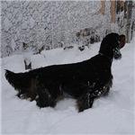Gordon in Snowstorm