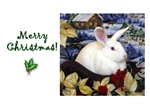Happy Endings Holiday Cards