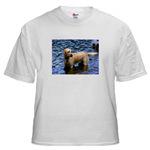 Natural Wonder Shirts