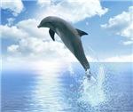 Daybreak Dolphin