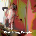 Watching People Cat
