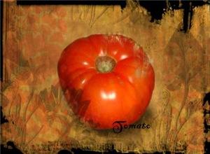 Botanical Tomato